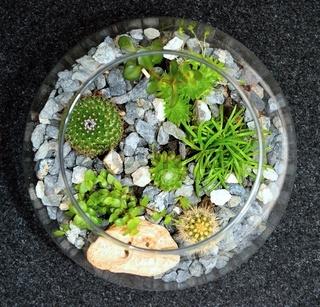 Table top plant decorative garden
