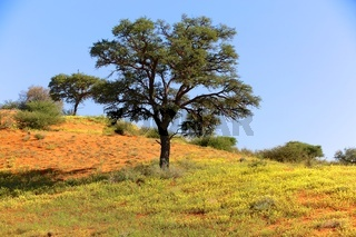 beautiful landscape at kgalagadi transfrontier park