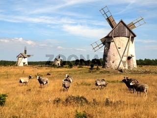 Windmühlen mit Guteschafen auf Gotland
