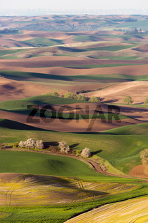 Palouse Region Steptoe Butte Farmland Rolling Hills Agriculture