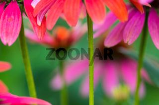 Sommer im Biogarten-25