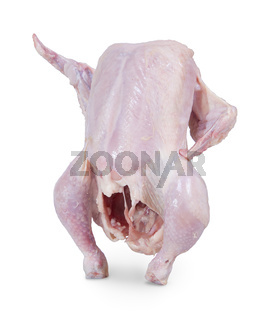 Raw chicken is standing on a white background and shows up wing