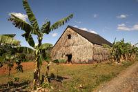 Tabakplantage bei Vinales in Kuba