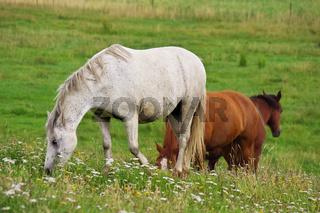 Pferde im Katinger Watt