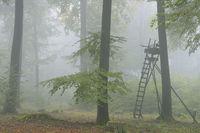 Hochsitz im Wald, Bayern, Deutschland