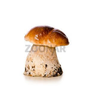 Mushroom isolated on a white background.