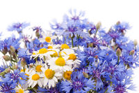 Cornflower and chamomile bunch blooms
