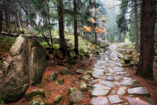 Stone Footpath in Autumn Mountain Forest