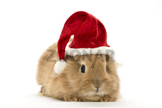 rabbit with a christmas hat