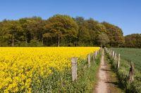 Pfad durch Landschaft mit Raps- und Getreidefeldern in Schleswig-Holstein