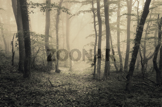Springa forest in fog. Beautiful natural landscape. Vintage style