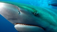 Shark#39;s deep eye