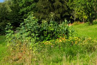 Pflanzen im Biogarten-22