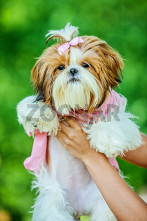 young woman holds dog her arms
