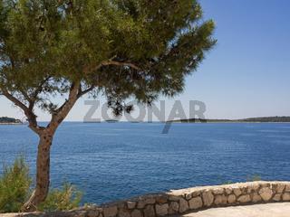 Eine Pinie am Ufer der Adria, mit Textfreiraum