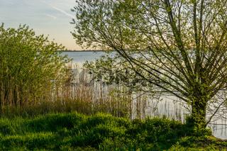 Landschaft am Dümmer See-86