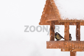 Tit birds in handmade wooden winter birdhouse shelter