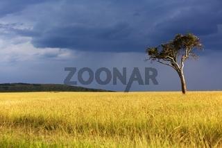 landscape of the masai mara national park