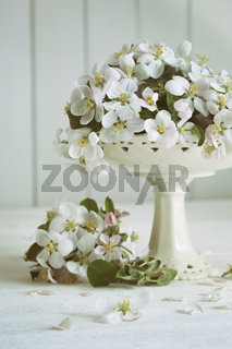 Still life with spring apple blossoms in vase
