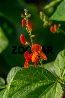 Pflanzen im Biogarten-15