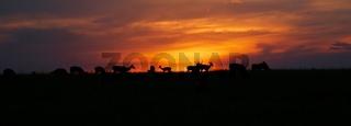 wonderful sunset with animals at the masai mara national park kenya africa