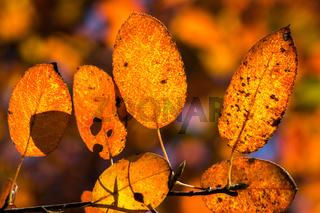 Bunter Herbst-36