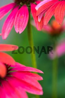 Sommer im Biogarten-22