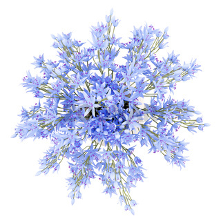 top view of blue flowers in vase isolated on white background. 3d illustration