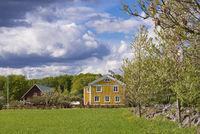 Altes gelbes Bauernhaus in Schweden