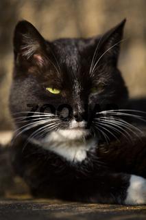 Katze Kater m Augen