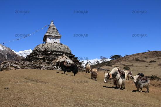 Yak herd carrying goods and stupa, scene near Kunde