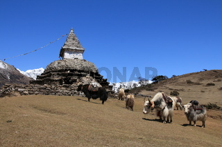 Yak herd carrying goods and stupa, scene near Kunde
