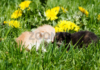 Two kittens playing on green grass in garden