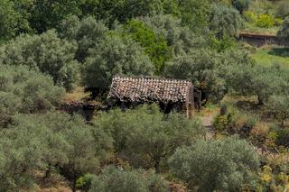 Haus Olivenplantage