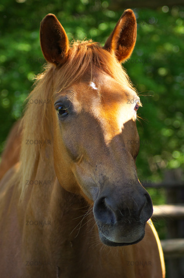 Foto Quarter-Haflinger Mix Lilly Bild #7338779