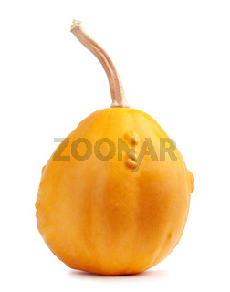 Big orange pumpkin on a white isolated background