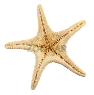 Starfish isolated white
