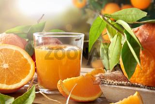 Glass of orange juice on a wooden in field closeup