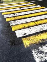 zebra on dark wet asphalt road