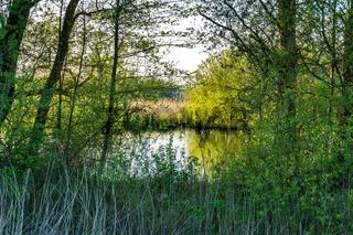 Landschaft am Dümmer See-80