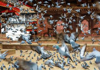 Pigeons taking off at Kathmandu Durbar Square