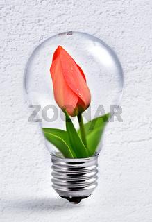 Blume in Glühbirne