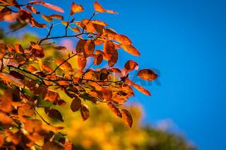 Bunter Herbst-31