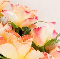 Rosen vor hellem Hintergrund