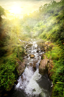 Tropical river at sunrise