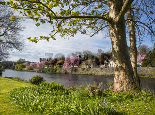 Springtime at Newton Stewart