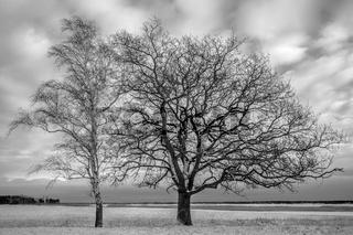 Ostsee - Darsser Boddenlandschaft im Winter