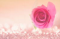 Pink roses with free space.