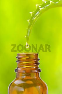 Aloe vera als Alternativmedizin