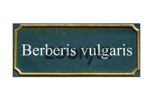 schild Berberis vulgaris, Gewoehnliche Berberitze